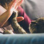 hand&paw