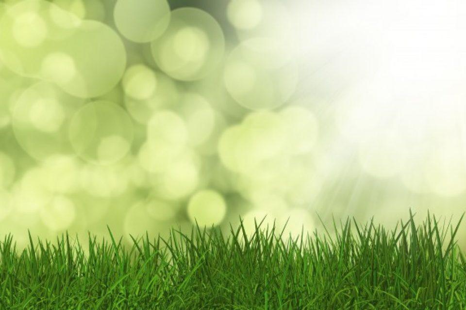Общински наредби позволяват застрояване на зелени площи в нарушение на закона
