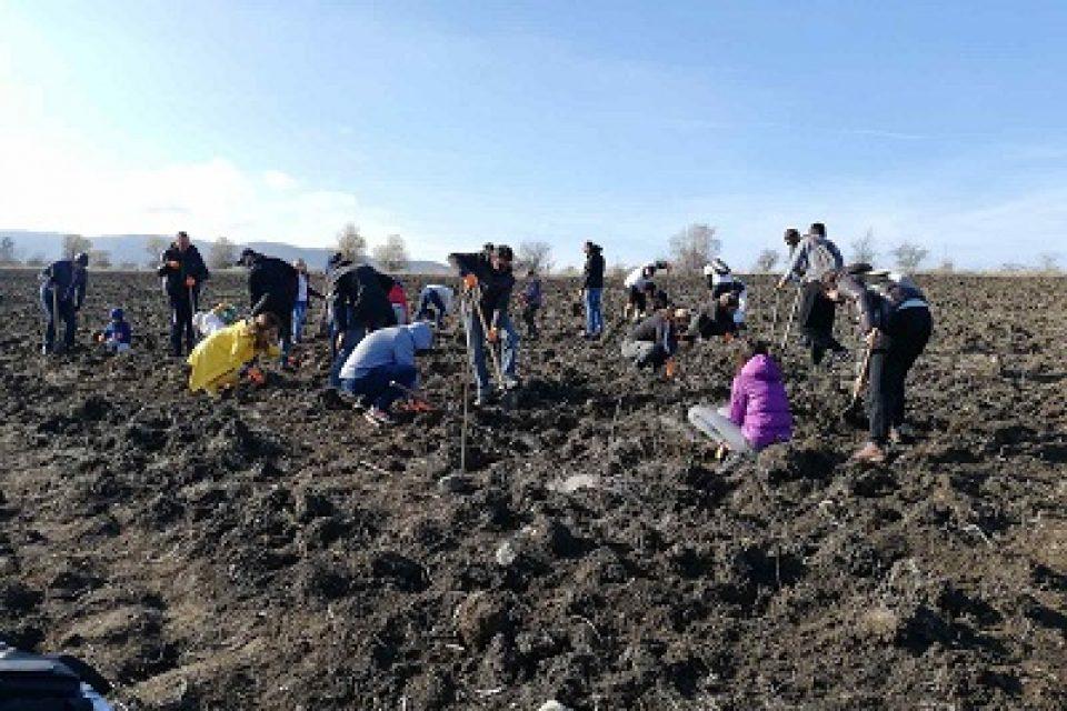 Над 6 500 доброволци се включиха досега в засаждането на Новата гора на София