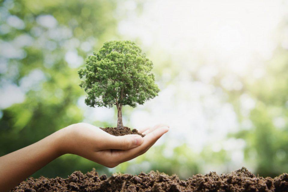 В София създават карта на дърветата